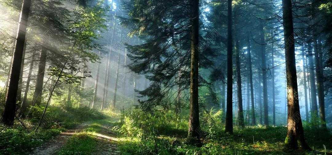 森林康养基地规划设计