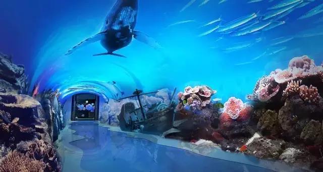 海洋公园怎么设计?