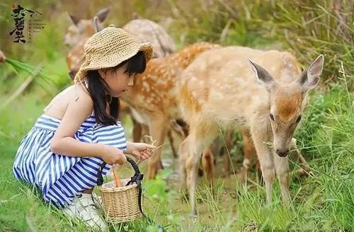 亲子游热度上涨,主题萌宠动物乐园游乐成为热门选择