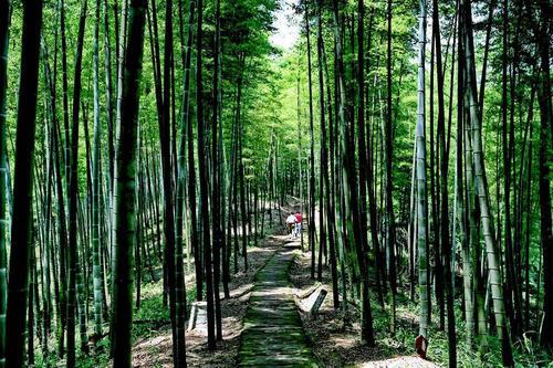 森林康养小镇规划研究